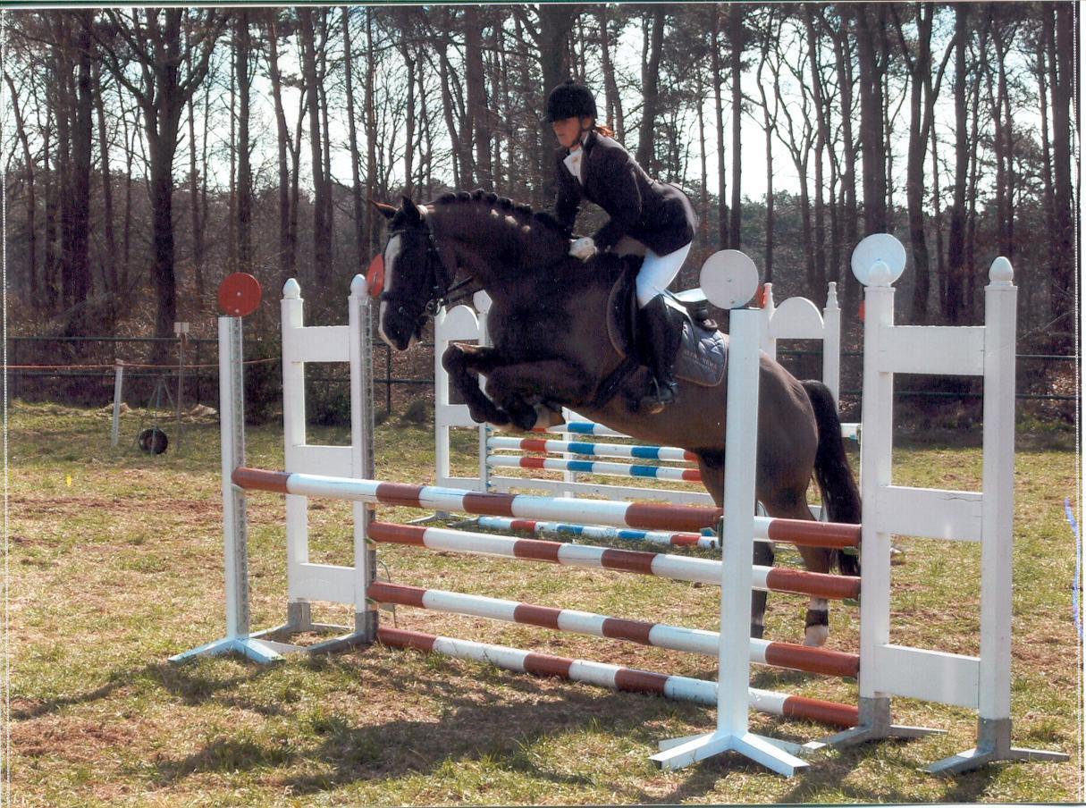 Paarden Informatie Alles Wat Je Moet Weten Over Paarden