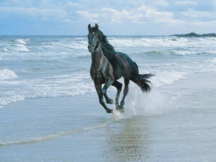 Kleurplaten Paarden Fries.Paarden Informatie Alles Wat Je Moet Weten Over Paarden Pagina 6
