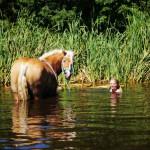 Haflinger Esmee in het water