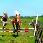Haflinger Esmee springend