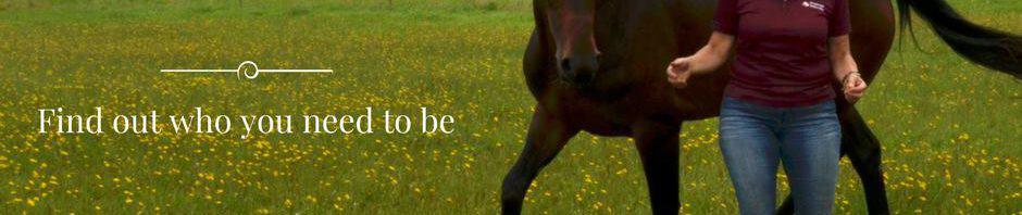 paarden-training